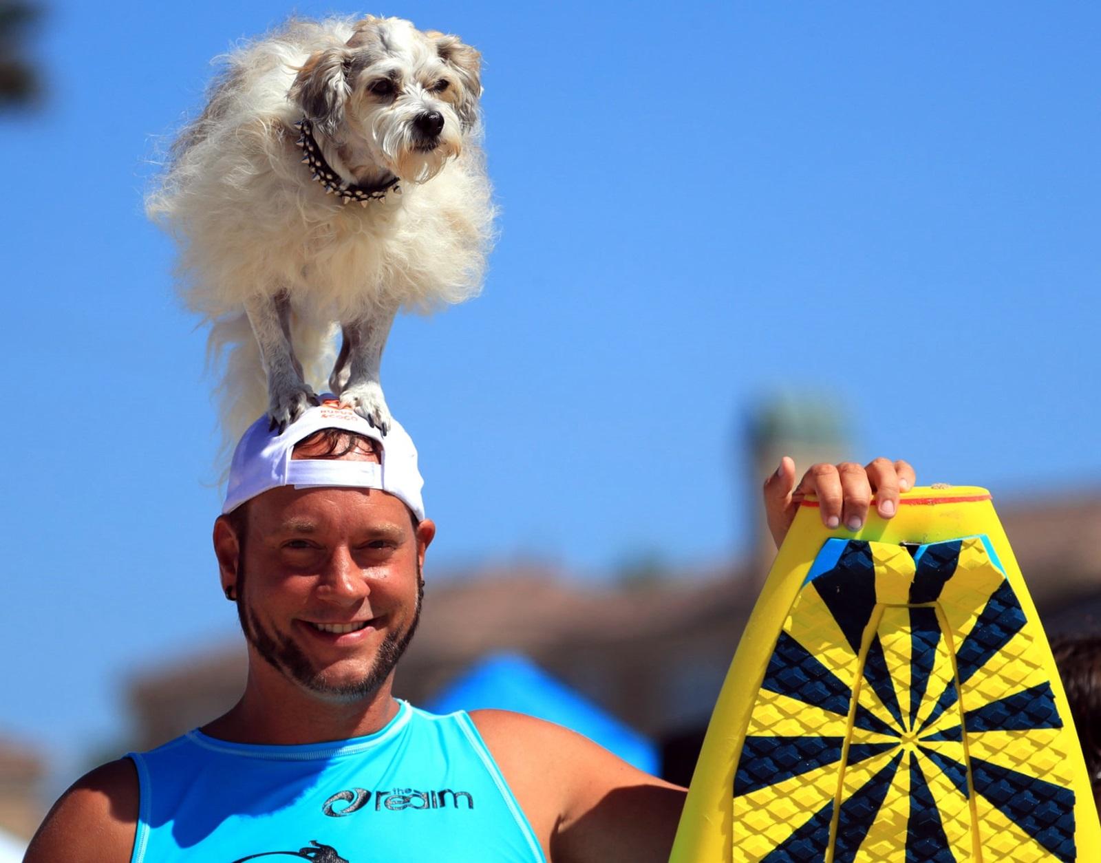 Zawody surfingowe dla psów