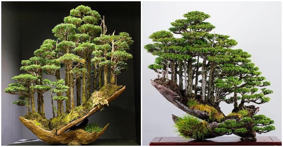 F5 Ten Ekspert Od Drzewek Bonsai Potrafi Wyczarować Małe